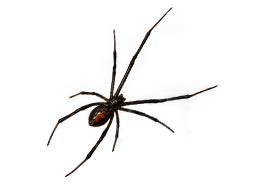 KPC_ContentThumb-Spiders