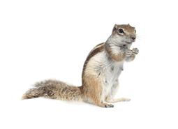 KPC_ContentThumb-Squirrel