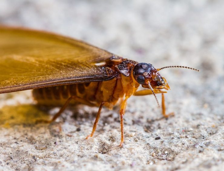 termite treatment temecula