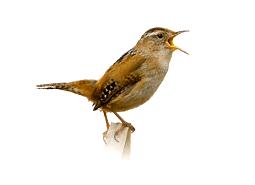 KPC_ContentThumb-Birds