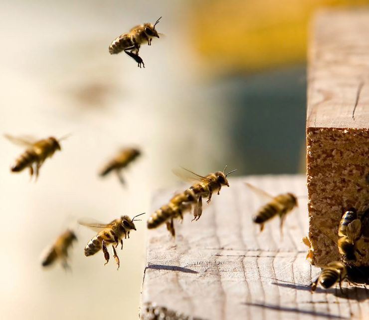 knockout-pest-control-temecula-bee-beehive-removal