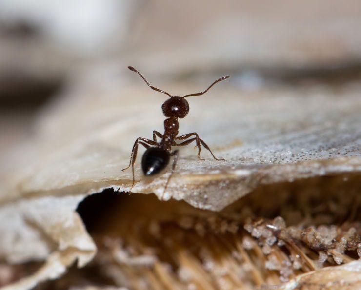 ant pest control temecula