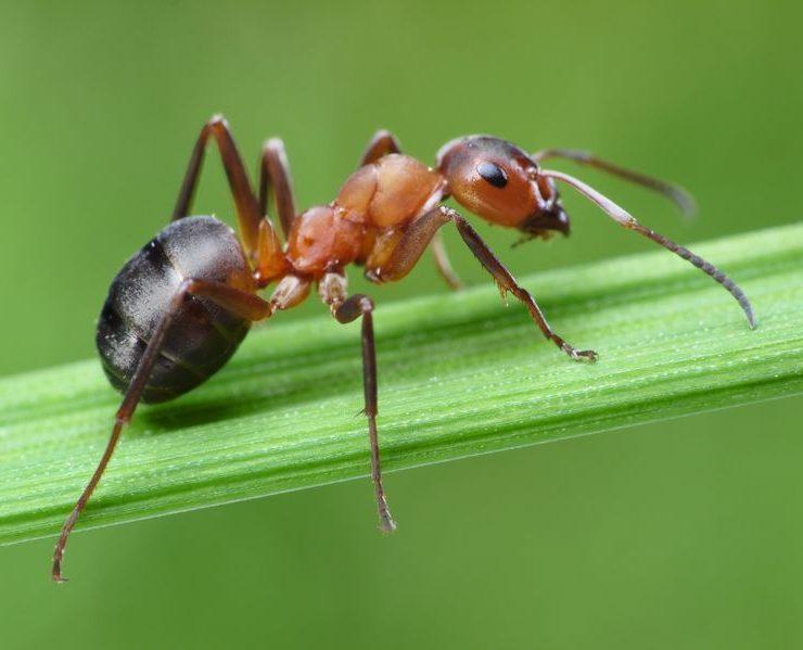temecula ant pest control