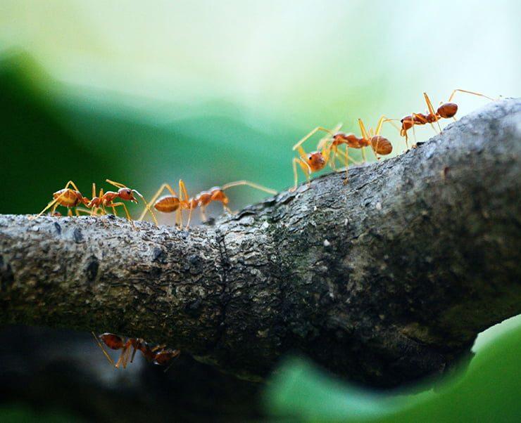 fallbrook pest control