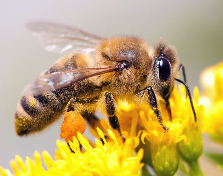 beneficial insects temecula pest control
