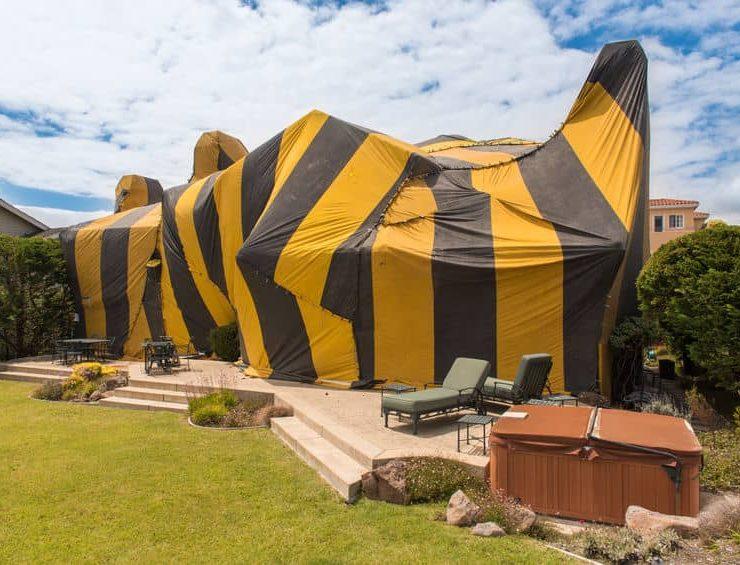 termite tenting oceanside